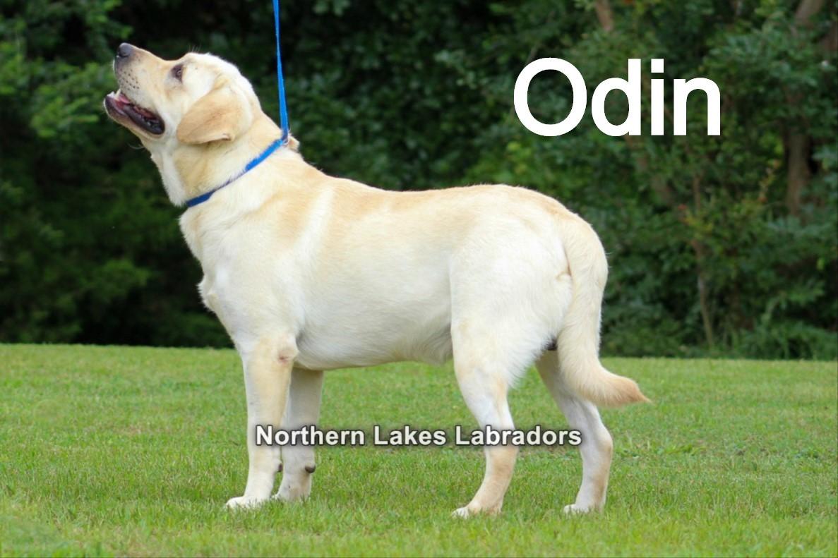 Odin 6.12_edited.jpg