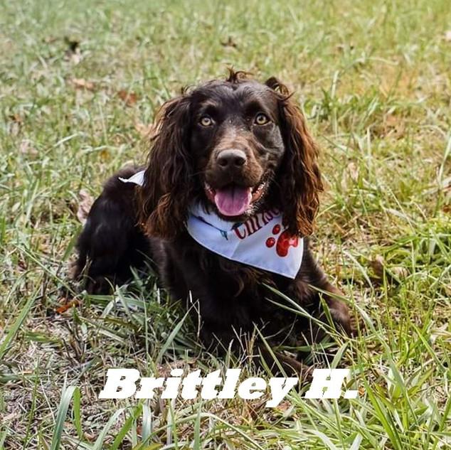 Brittley H..jpg