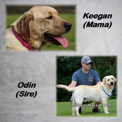 Reserve 2nd Pick Girl (Keegan x Odin Due~ June 1st)