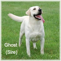 Ghost 8_edited
