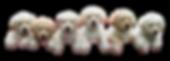 Puppies-climbing-transparent-image.png