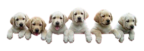 Puppies-climbing-transparent-image.png