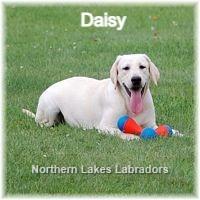 tn_Daisy%208_edited.jpg