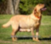 tn_Harlee and Pups 3.15.18 (13)-2.jpg