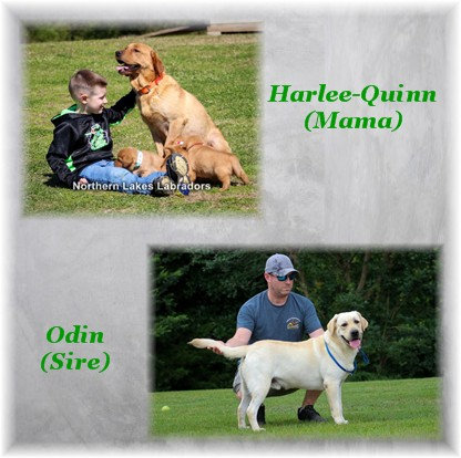 Reserve First Boy (Harlee-Quinn x Odin~ Due March 6th)