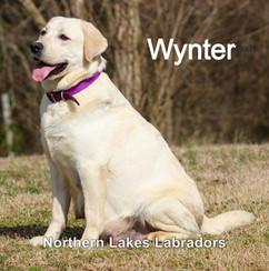 Wynter 2.4_edited.jpg