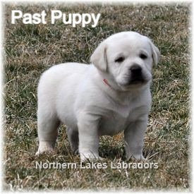 Reserve Fourth Pick Girl (Daisy x Ghost~ Due March 16th)