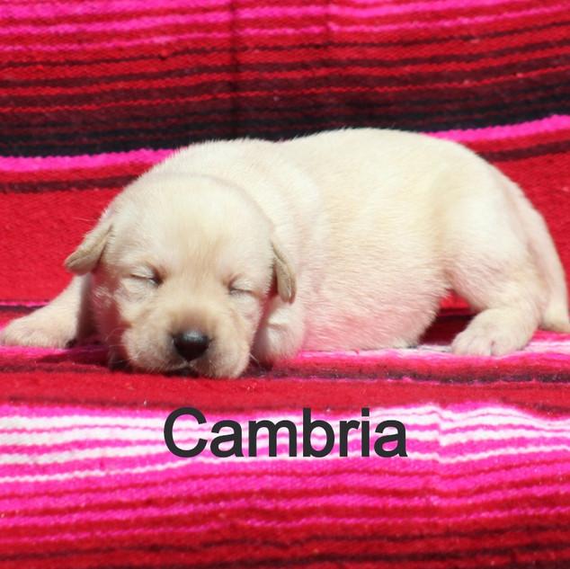 F4%20Cambria%204.28_edited.jpg