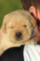 Harlee's Pups with boys 1.7.20 (7)-2.jpg