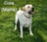 Cora 5.2_edited.jpg