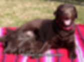 tn_Ethan and Tiana with Pups 2.4.19 (6)-