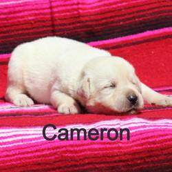 M1%20Cameron%204.28_edited.jpg