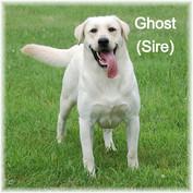 Ghost 8_edited.jpg