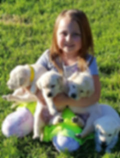 Girl with Northern Lakes Labradors Puppies