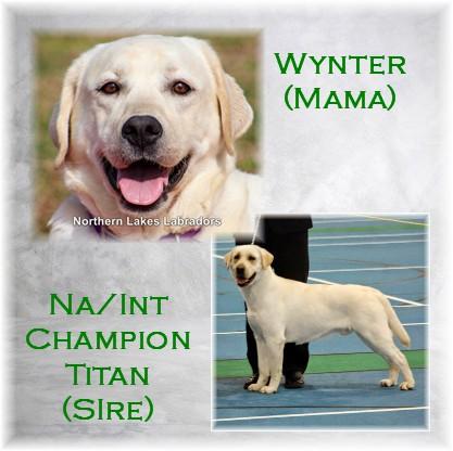 Wynter Titan Pic