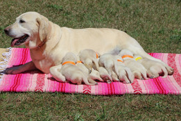 Daisy and her Pups 4.2.21 (2)-2.jpg