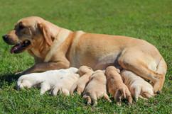 Keegan's Pups 10.16.20 (1)-2.jpg