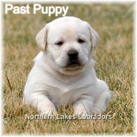 Reserve Third Pick Boy (Daisy x Ghost~ Due March 16th)