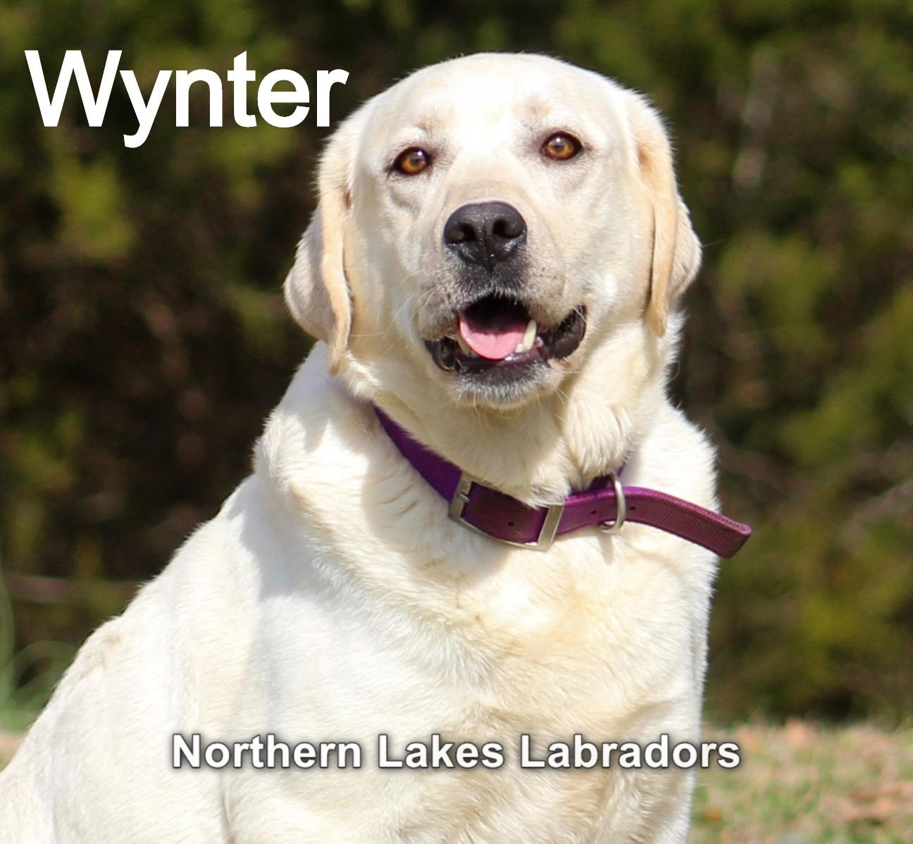 Wynter 2.4_edited