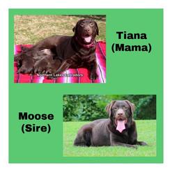 Tiana Moose Pic.jpg