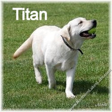 tn_Titan 7_edited.jpg