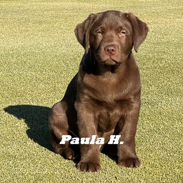Paula H..jpeg