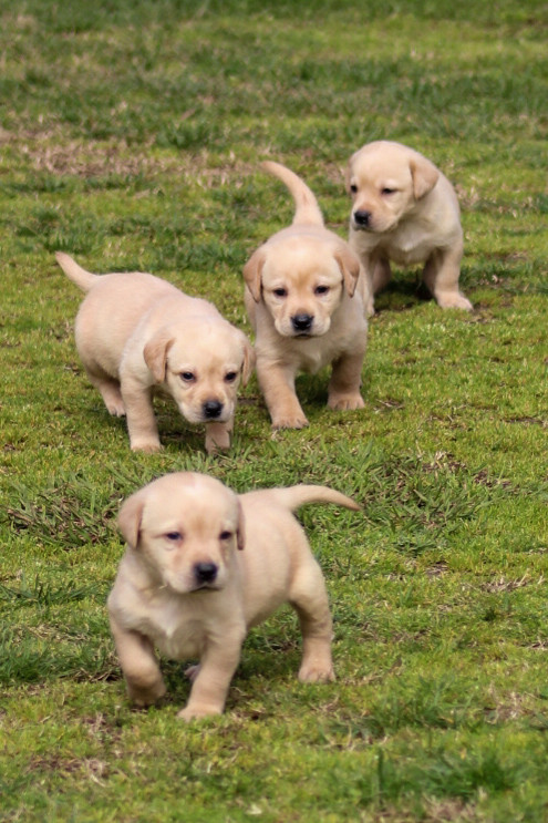 Keegan and Pups 2.23.20 (12).jpg