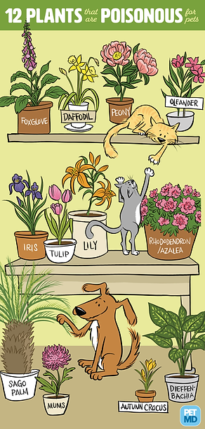 Pet MD Poisonous Plants and Puppies Cats