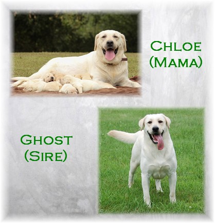 Chloe Ghost Litter