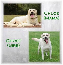 Chloe Ghost Litter