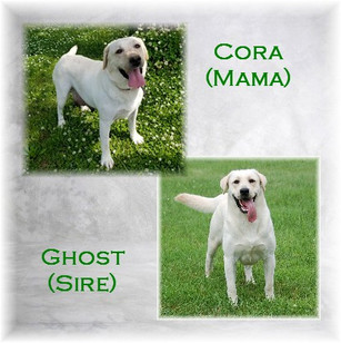Cora Ghost Pic.jpg