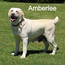 Amberlee 5.14_edited.jpg