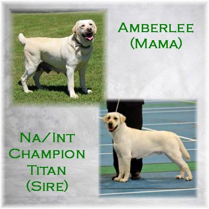 Amberlee Titan Pic