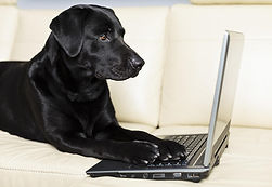 dog-using-computer-morepixels.jpg