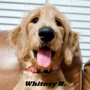 Whitney H..jpeg