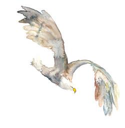 Bald Eagle by originalizzie