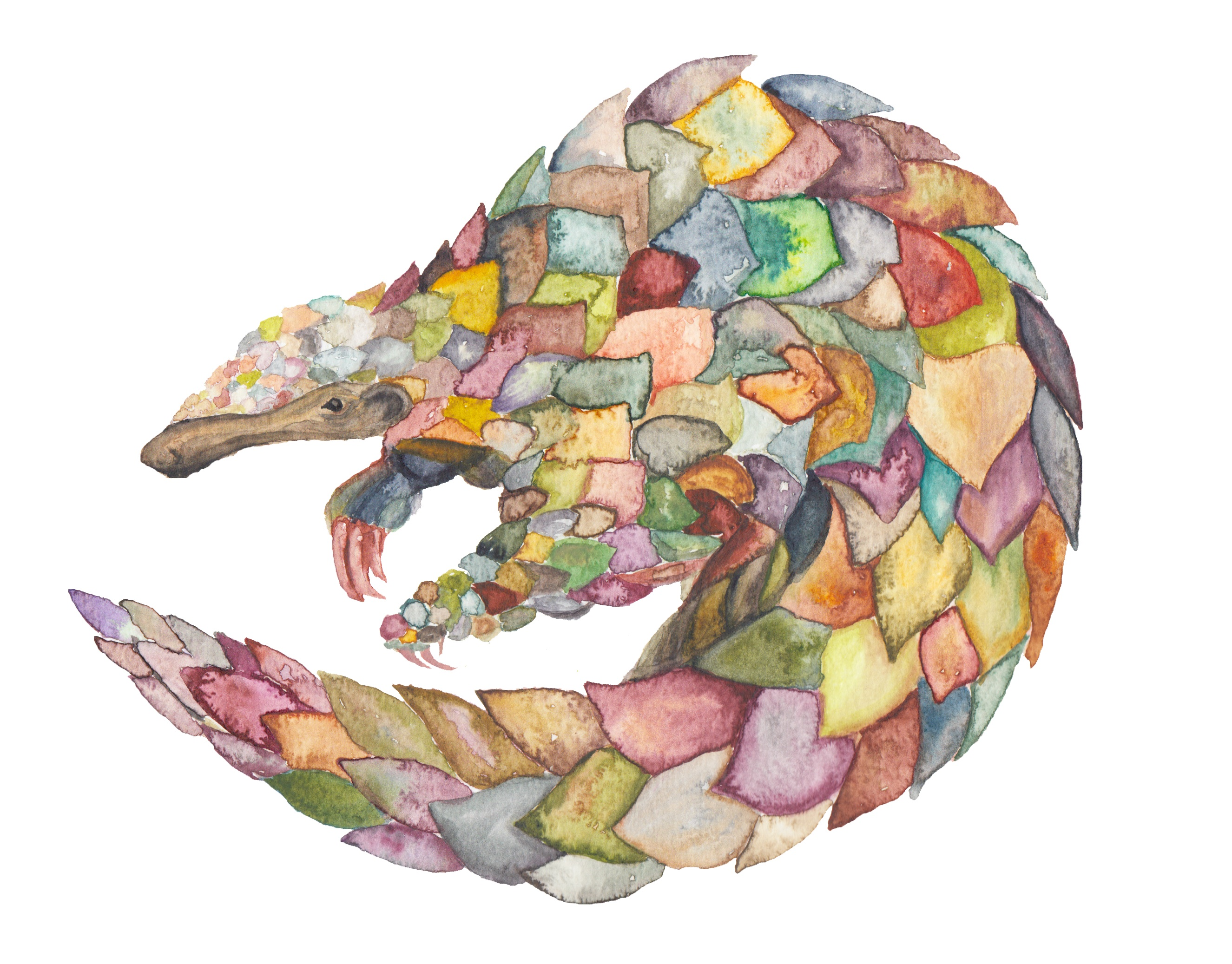 Pangolin by originalizzie