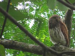 birdwatching-kandy-srilanka)