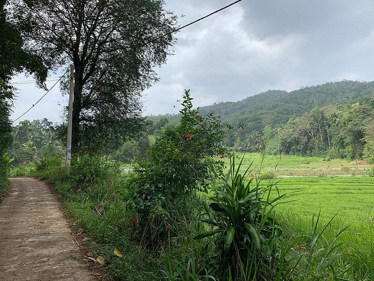 Homestay in a traditional village in Kandy Sri Lanka