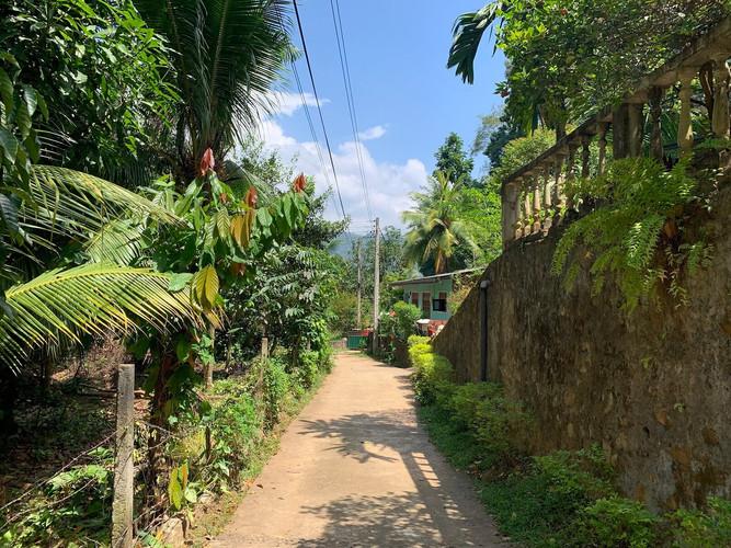 Village environment