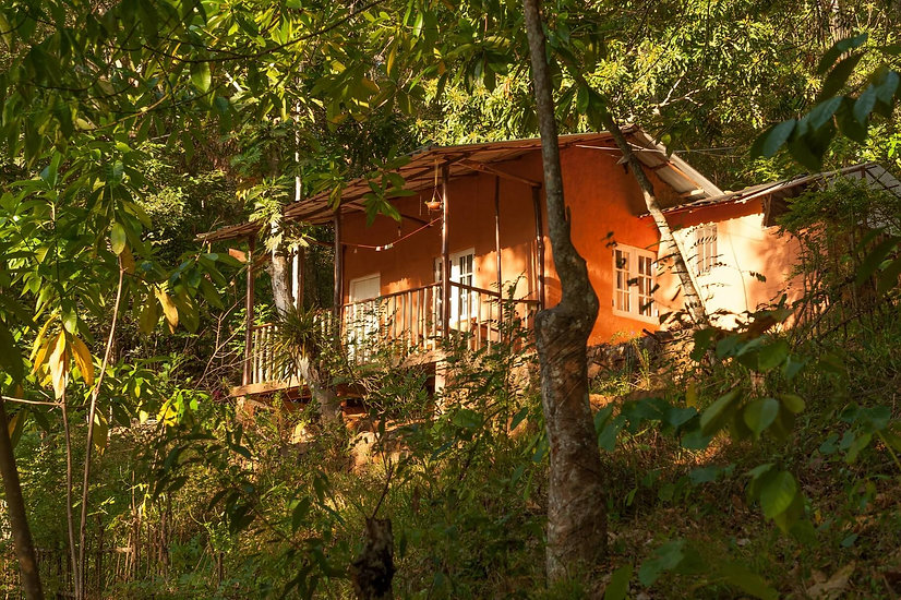 eco lodges sri lanka, eco ldoge kandy, nature retrea, yoga retreat, yoga meditation sri lanka, jungle lodge sri lanka, jungle cabin, tree house sri lanka
