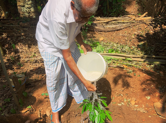 A local farmer waters the first tree planted
