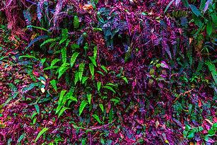 forest-background-2585652_1920.jpg