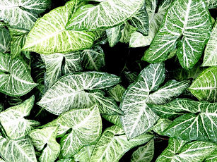 green-1839887_1920_edited_edited.jpg