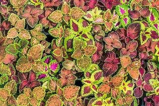 colorful-leaves-2657677_1920.jpg