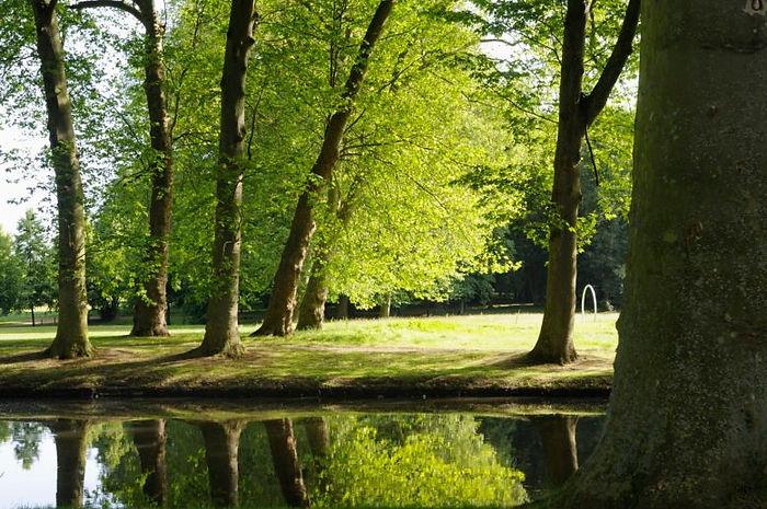 Miroir-deau-du-parc-de-labbaye-de-Maubui