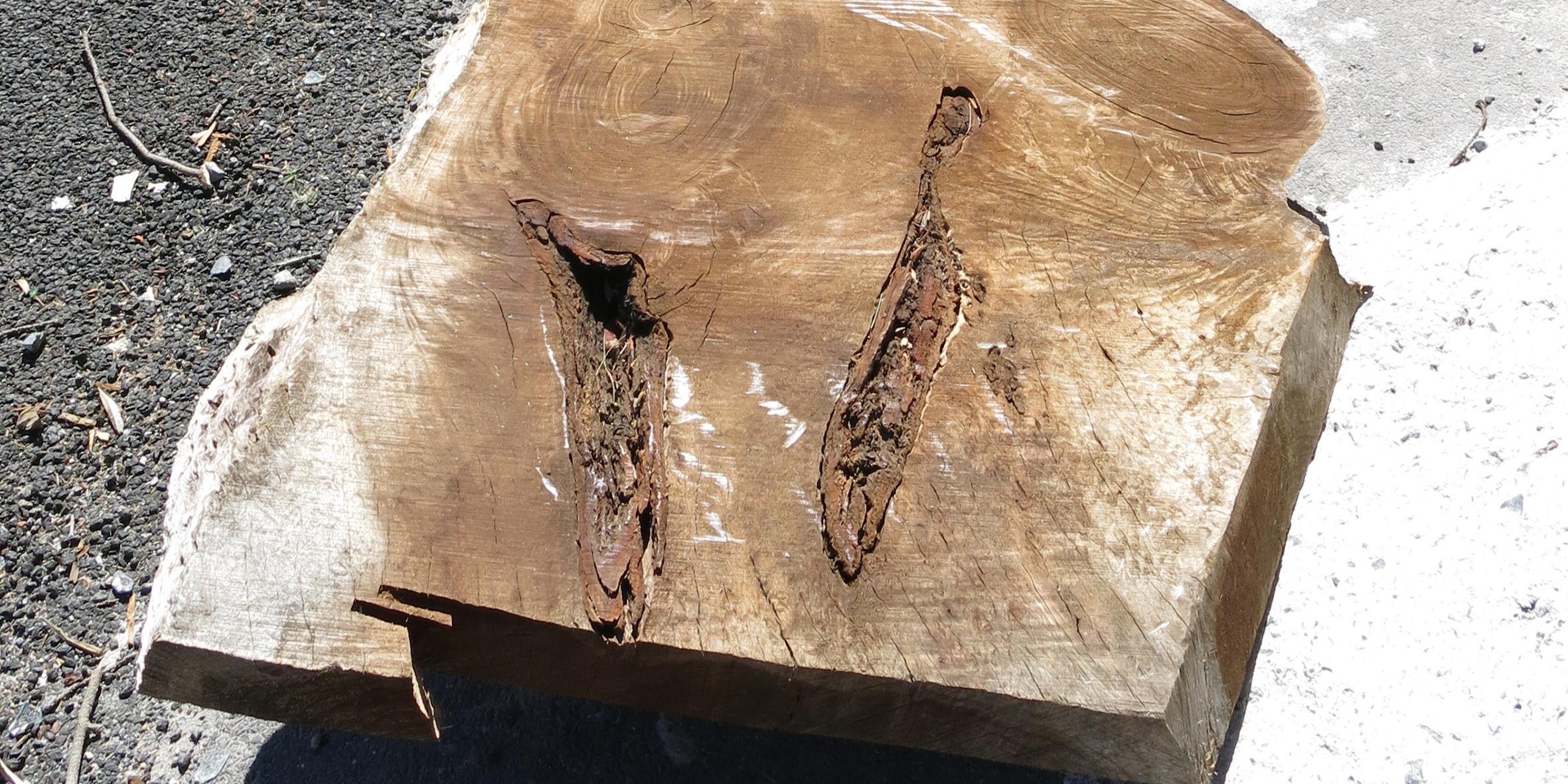 blackwood slab, approximate dimensions 5100 l x 850 w x 70 d