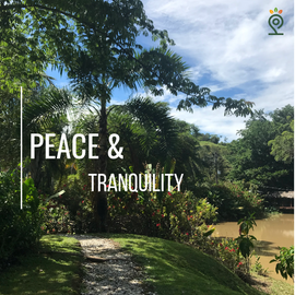 Solo Paz y Tranquilidad