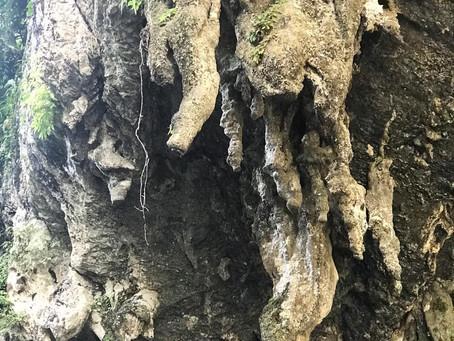 Formaciones Rocosas - Estalactitas y Estalagmitas