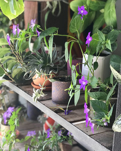 Mini vivero - Jardín